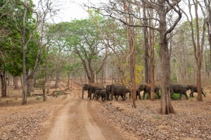 A herd of elephants seen while on a wildlife safari in Kabini forest reserve